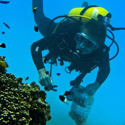 Marine biology student scuba diving on field trip